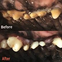 دندانپزشکی در حیوانات خانگش