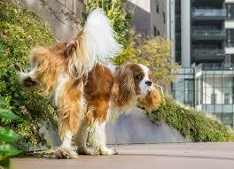 سگ مبتلا به بیماری دیابت بی مزه