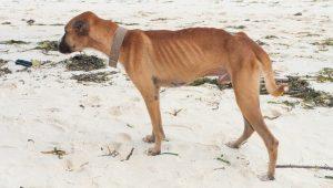 سگ مبتلا به هیپرتیروئیدیسم
